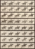 Jumping a Hurdle Print by Eadweard Muybridge