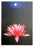Lone Lily Limited Edition by Michael Knigin