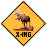 Moose Crossing Blechschild