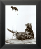 Gato y ratón Póster