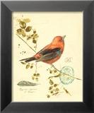Gilded Songbird III Posters by Chad Barrett