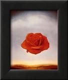 Meditativ rose, ca. 1958 Plakater av Salvador Dalí