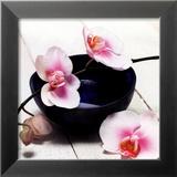 Orchid in a Bowl Arte por Stephane De Bourgies