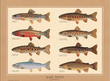 Rare Trout Fish Chart Art Print Poster Pósters