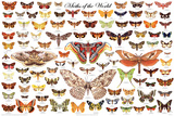 Moths of the World Educational Science Chart Poster Láminas