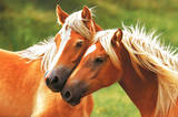 Horses (Blondes) Art Poster Print Poster