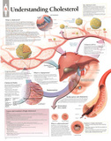 Laminated Understanding Cholesterol Educational Chart Poster 高画質プリント