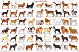 Laminated Dogs of the World Educational Animal Chart Poster Kunstdrucke