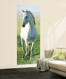 White Horse Giant Mural Poster Mural de papel de parede