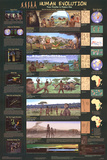 Laminated Human Evolution Educational Science Chart Poster Posters