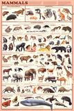 Laminated Mammals Educational Animal Chart Poster Print