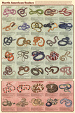 Laminated North American Snakes Educational Science Chart Poster Pôsters