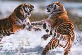 Steve Bloom (Tigers) Art Poster Print Bilder