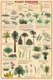 Laminated Plant Kingdom 2 Educational Science Chart Poster Kunstdrucke