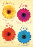 Four Daisies Dance Sing Love Live Art Print Poster Posters