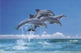 Steve Bloom (Four Dolphins) Art Poster Print Kunstdrucke