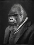 Mario Gorillini (le gorille) Posters par  Grand Ole Bestiary