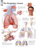 Respiratory System Educational Chart Poster Prints