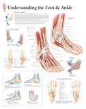 Understanding the Foot and Ankle Educational Chart Poster Posters