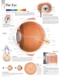 Laminated The Eye Educational Chart Poster Foto
