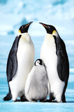 Penguin Family Art Print Poster Kunstdrucke