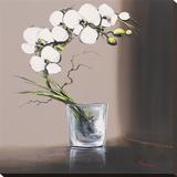 Volutes D'Orchidées Blanches I Bedruckte aufgespannte Leinwand von Olivier Tramoni