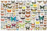Papillons du monde Poster
