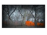 Central Park Arte por  NaxArt