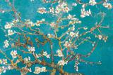 Amandeltakken in bloei, Saint-Remy, ca. 1890 Foto van Vincent van Gogh