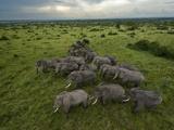 Elephants have miles of savanna to roam inside Queen Elizabeth Park. Fotografie-Druck von Joel Sartore