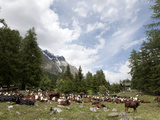Courmayeur, Mont Blanc, Val Ferret, Aosta Valley, Italy, Europe Photographic Print by Angelo Cavalli