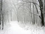 Trees Line a Snow-Covered Road Through a Forest Reproduction photographique par Amy & Al White & Petteway