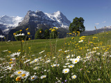View from Grindelwald to Eiger, Bernese Oberland, Swiss Alps, Switzerland, Europe Impressão fotográfica por Hans Peter Merten