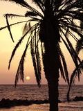 Sunrise Near Sidi Slim, Island of Jerba, Tunisia, North Africa, Africa Stampa fotografica di Hans Peter Merten