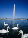 Swans Below the Jet D'Eau (Water Jet), Geneva, Lake Geneva (Lac Leman), Switzerland, Europe Reproduction photographique par Stuart Black