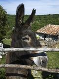 Donkey in Rural Setting, Cres Island, Kvarner Gulf, Croatia, Europe Reproduction photographique par Stuart Black