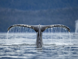 Humpback Whale Tail While Diving in Frederick Sound, Tongass National Forest, Alaska, Usa Premium-Fotodruck von Paul Souders
