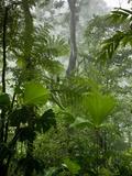 Rainforest Along Fortuna River, La Fortuna, Costa Rica Photographic Print by Paul Souders