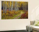 Footpath Through Autumn Aspen Trees, San Isabel National Forest, Colorado, Usa Wall Mural by Adam Jones