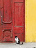 Cat and Colorful Doorway, Valparaiso, Chile Photographic Print by Scott T. Smith
