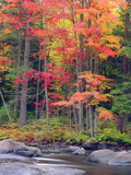 Autumn in the Adirondack Mountains, New York, Usa Fotografisk trykk av Christopher Talbot Frank