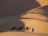Camels and Dunes, Erg Chebbi, Sahara Desert, Morocco Fotografisk tryk af Peter Adams