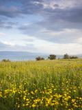 Israel, the Galilee, Tiberias, Sea of Galilee-Lake Tiberias Photographic Print by Walter Bibikow