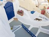 Cats, Oia, Santorini, Cyclades Islands, Greece Lámina fotográfica por Peter Adams