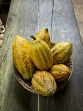 Costa Rica, La Virgen De Sarapiqui, Picked Cocoa Pods Used for Demonstration on How to Make Chocola Photographic Print by John Coletti