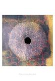 Seashell-Urchin Kunstdruck von Elena Ray