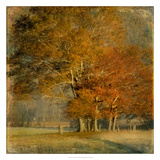 Cluster of Oaks Giclee Print by Danny Head