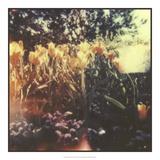 Tulipa Exposta I Giclee-trykk av Jason Johnson