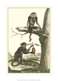 Macaque and Douc Monkeys Giclee-trykk av Denis Diderot