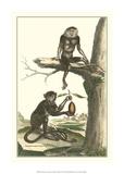 Macaque and Douc Monkeys Impressão giclée por Denis Diderot